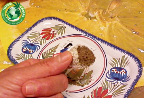 Recipe for delicious hemp, coconut and cocoa truffles with hemp protein powder. For vegetarians and vegans